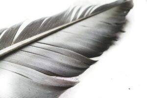 what do feathers symbolize in the bible