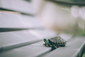 what does a turtle symbolize in the bible