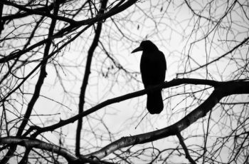what do crows symbolize in the bible