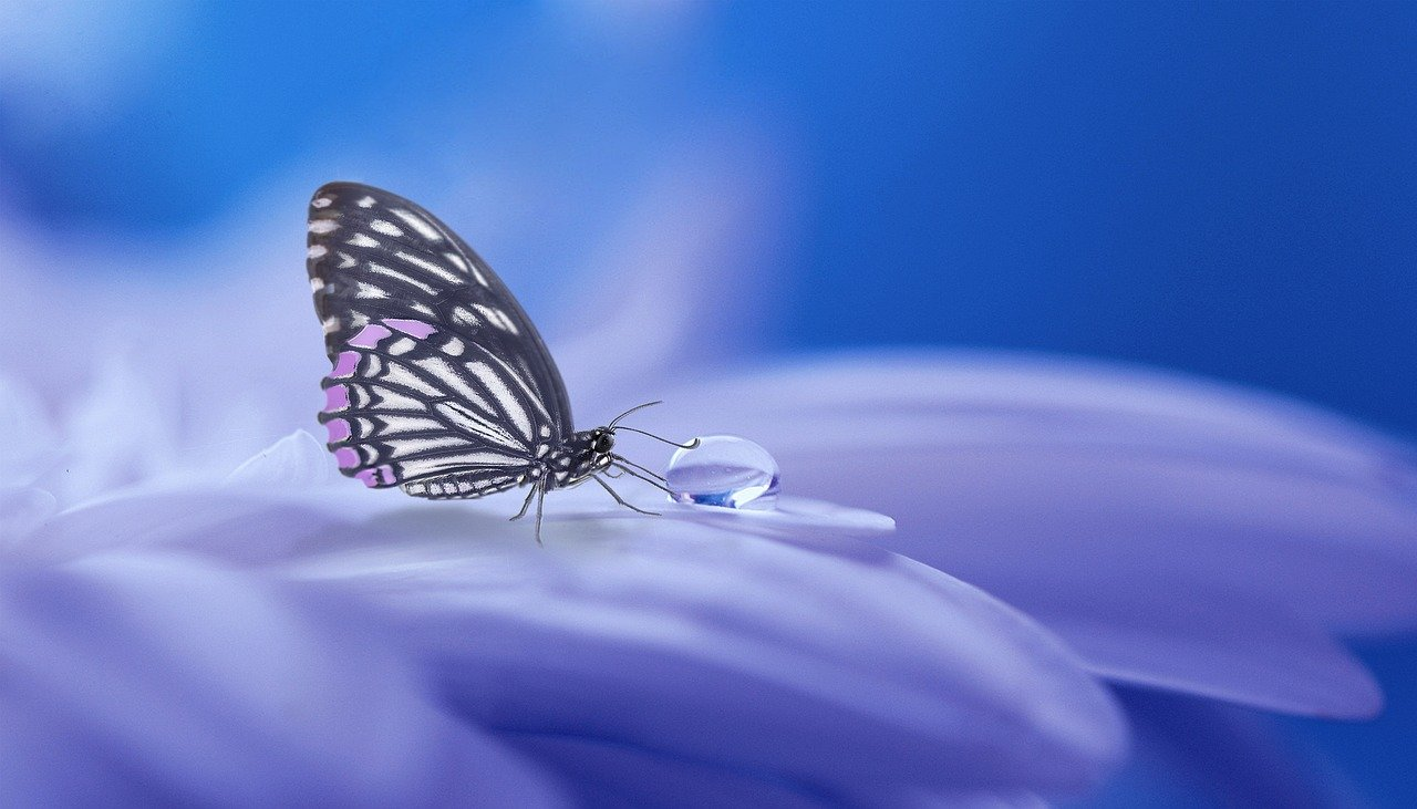 Butterflies And Christian Transformation