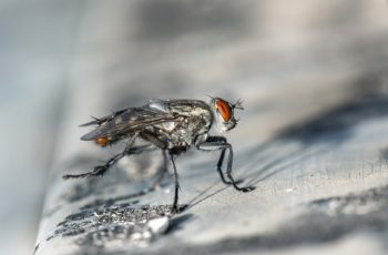 what do flies symbolize in the bible