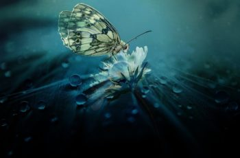what does a butterfly symbolize in the bible