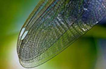 what does a dragonfly symbolize in the bible