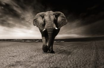 what do elephants symbolize in the bible